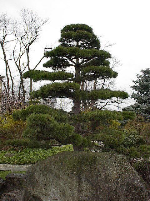 freiburg-dreisamtal.de: japanischer garten beim seepark freiburg, Garten ideen