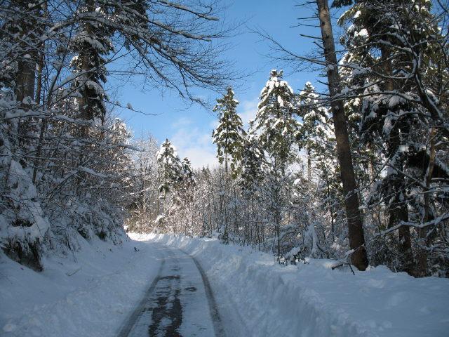 Schnee Im Schwarzwald Heute Bilder
