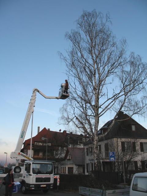 Freiburg Dreisamtal De Gartenbau Landschaftsbau Baumpflege
