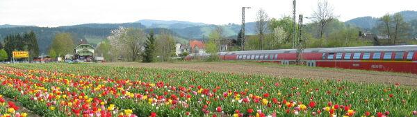 Ferrovie in Foresta Nera