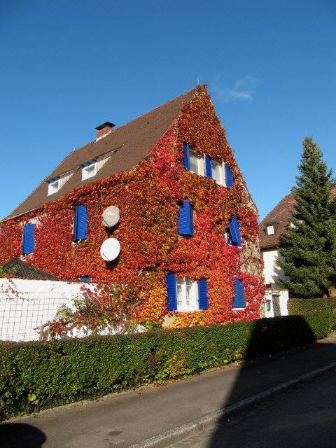 freiburg goldener oktober bilder von einer gartenmauer im herbst im dreisamtal